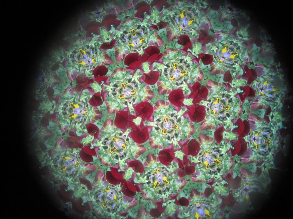 kaleidoscope view of the flowers 3