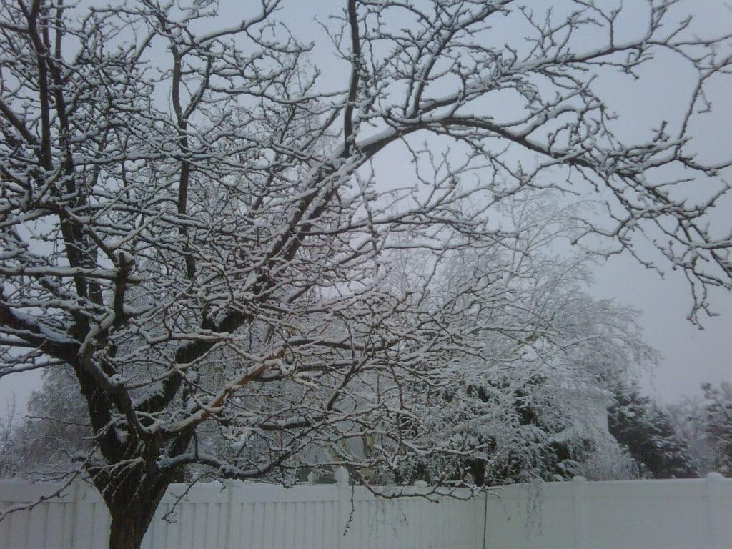 Snow in Utah, pretty but cold!