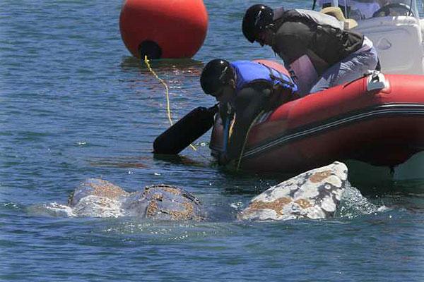 Whale Dana Point