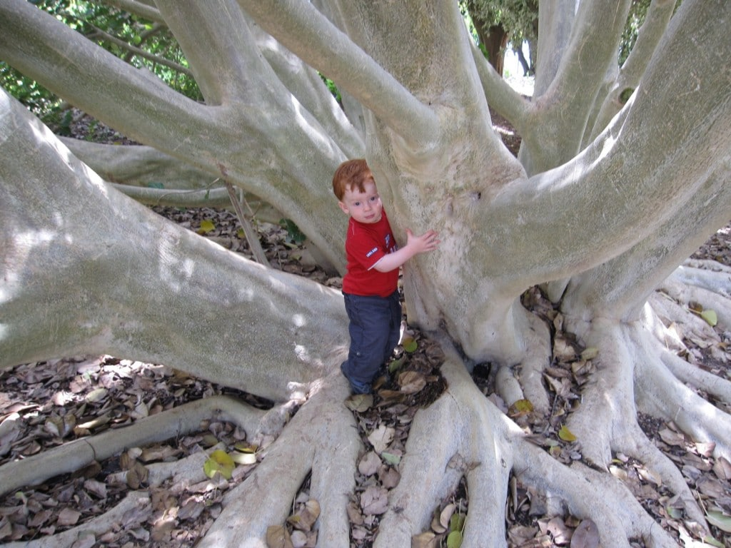 Leo trying to climb a huge tree