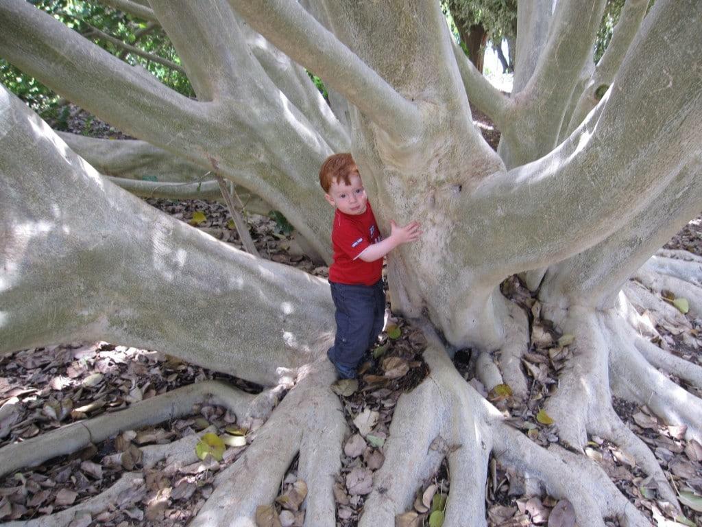Leo trying to climb a huge tree